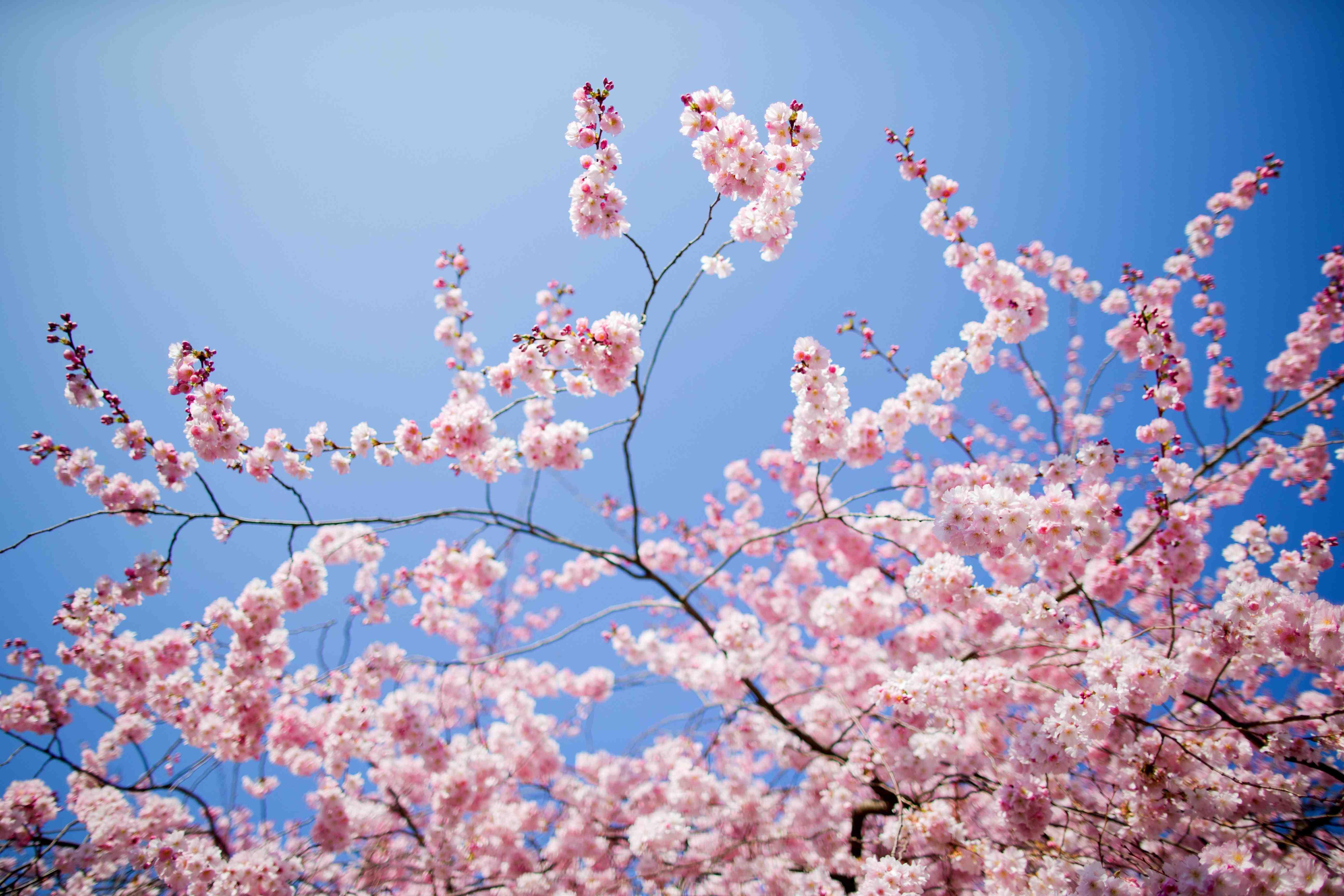 ricetta di Primavera